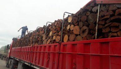 madera-696x522